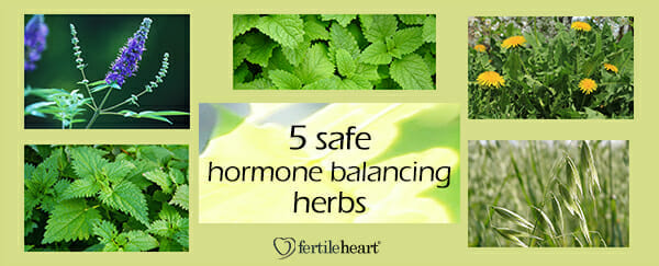 Fertility Herbs - 5 Hormone Balancing Herbs - Juicing for Fertility