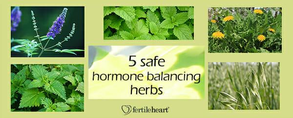 Fertility Herbs - 5 Hormone Balancing Herbs