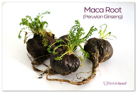 Mac Root Peruvian Ginseng A Fertility Superfood