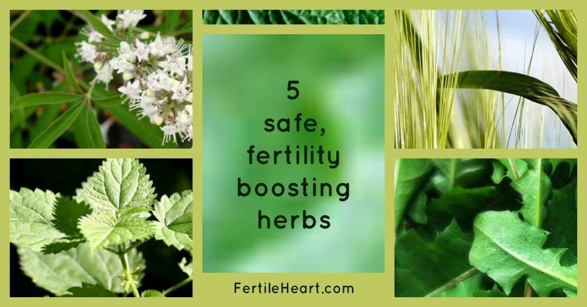 herbal infusions for infertility, fertility diet, pregnancy herbs, fertility herbs, fertility boosting herbs, herbal medicines for infertility, naturally reverse infertility and get pregnant naturally, infertility help