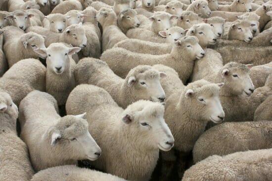 Sheepwalking into Fertility Fog