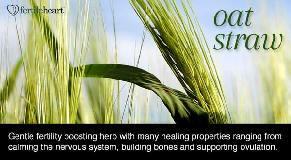 Fertility Herbs - Oat Straw Hormone Balancing Herb