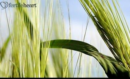 slide-3-oat-straw