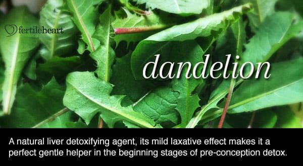 Fertility Herbs - Dandelion Hormone Balancing Herb